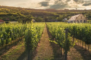 investir domaine viticole bergeracois